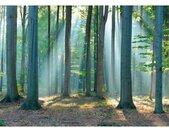 Reinders! Decoratief paneel Bos in het zonlicht 140/100 cm