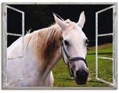 Artland Artprint Blik uit het venster - wit paard in vele afmetingen & productsoorten - artprint van aluminium / artprint voor buiten, artprint op linnen, poster, muursticker / wandfolie ook geschikt voor de badkamer (1 stuk)
