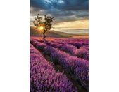 Wall-Art Vliesbehang Lavendelbloemen in de Provence
