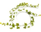 Botanic-Haus Kunst-potplanten Wijnrankenkrans (1 stuk)