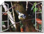 Artland Artprint Blik uit het venster - pimpelmees in vele afmetingen & productsoorten - artprint van aluminium / artprint voor buiten, artprint op linnen, poster, muursticker / wandfolie ook geschikt voor de badkamer (1 stuk)