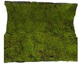 Botanic-Haus Kunst-potplanten Mosmat (1 stuk)