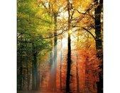 Wall-Art Vliesbehang Gouden herfst