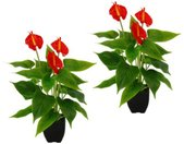 I.GE.A. Kunstplant Anthurienplant (set, 2 stuks)